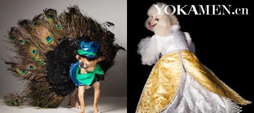 时装狗》一书的部分销售收入将捐给纽约动物保护协会