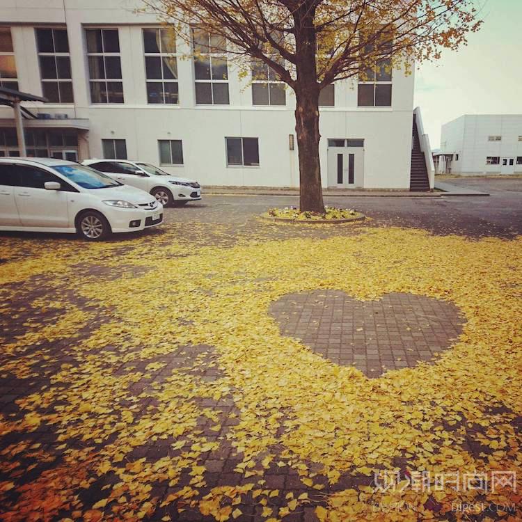 """日本的人们把树叶变成多彩的""""..."""