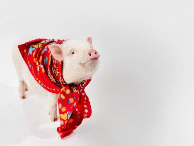 可爱 机灵 憨厚 时髦...... 2019年的猪猪看来都很有魅力呀
