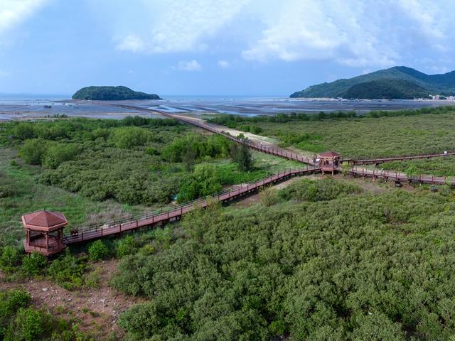 马爹利在中国启动红树林保护项目 携手保护国际基金会在广东省阳江市海陵岛助力红树林与生物多样性保护